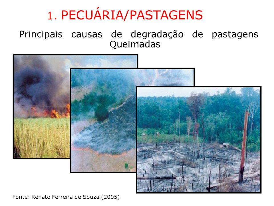 1. PECUÁRIA/PASTAGENS Principais causas de degradação de pastagens Queimadas.