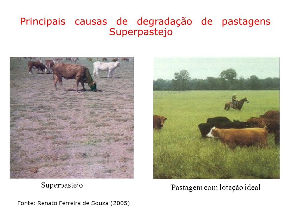 Principais causas de degradação de pastagens Superpastejo