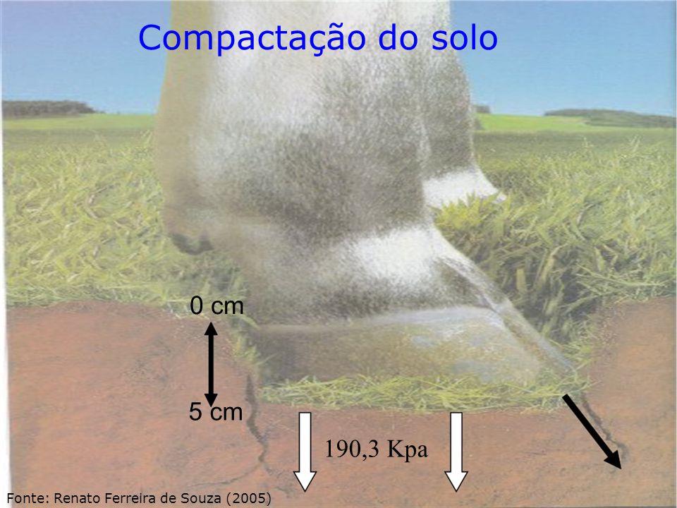 Compactação do solo 0 cm 5 cm 190,3 Kpa