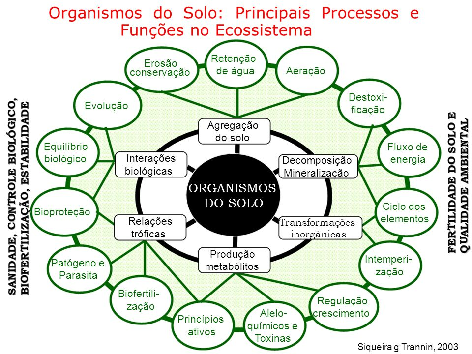 Organismos do Solo: Principais Processos e Funções no Ecossistema
