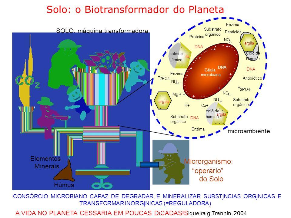 Solo: o Biotransformador do Planeta