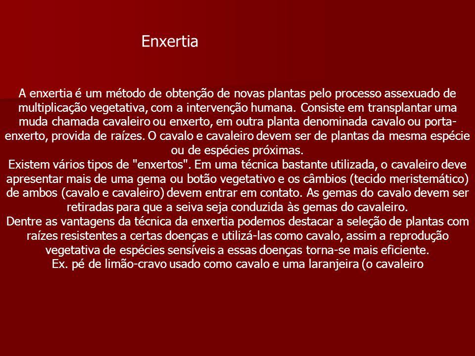 Enxertia