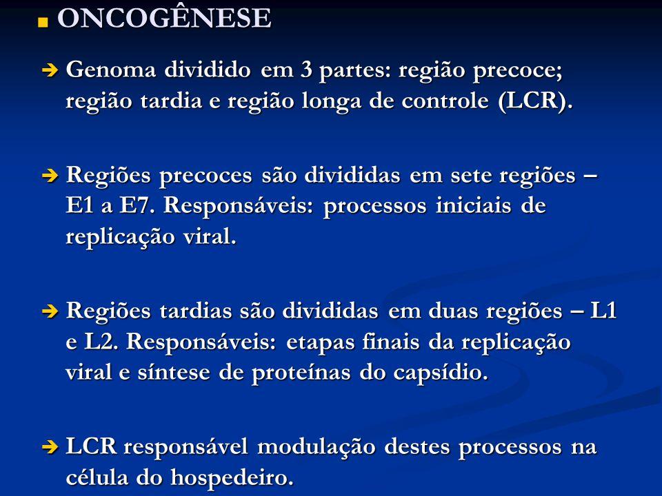 ONCOGÊNESE Genoma dividido em 3 partes: região precoce; região tardia e região longa de controle (LCR).