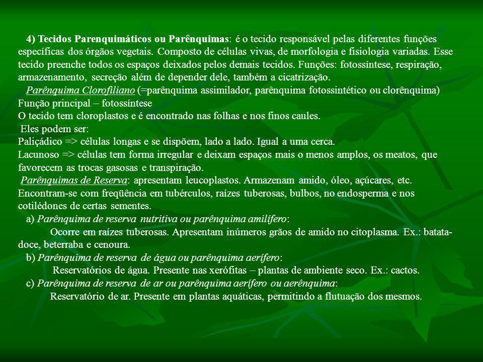 4) Tecidos Parenquimáticos ou Parênquimas: é o tecido responsável pelas diferentes funções específicas dos órgãos vegetais. Composto de células vivas, de morfologia e fisiologia variadas. Esse tecido preenche todos os espaços deixados pelos demais tecidos. Funções: fotossíntese, respiração, armazenamento, secreção além de depender dele, também a cicatrização.