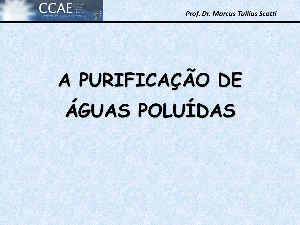 A PURIFICAÇÃO DE ÁGUAS POLUÍDAS