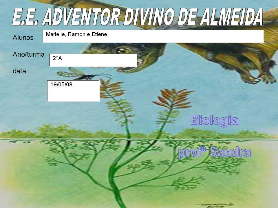 E.E. ADVENTOR DIVINO DE ALMEIDA