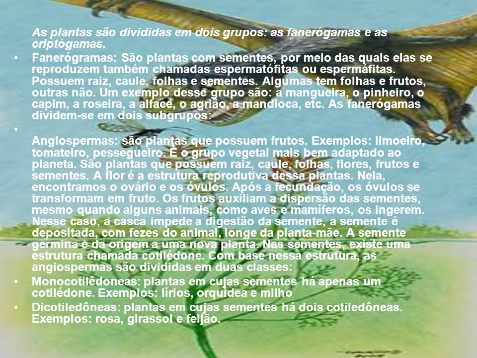 As plantas são divididas em dois grupos: as fanerógamas e as criptógamas.