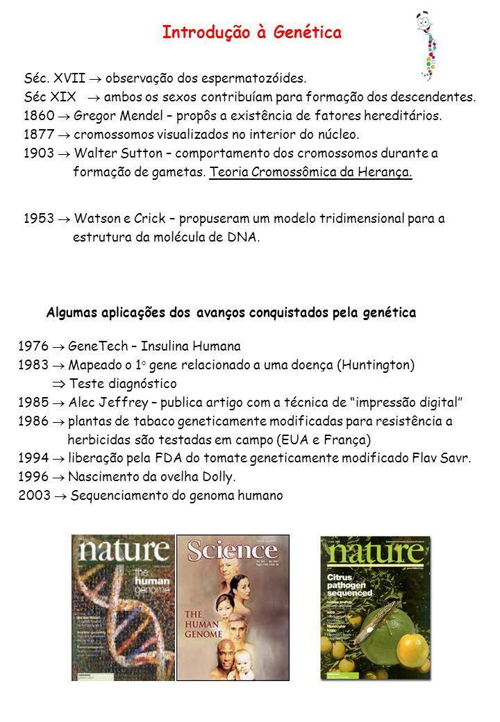 Introdução à Genética Séc. XVII  observação dos espermatozóides.