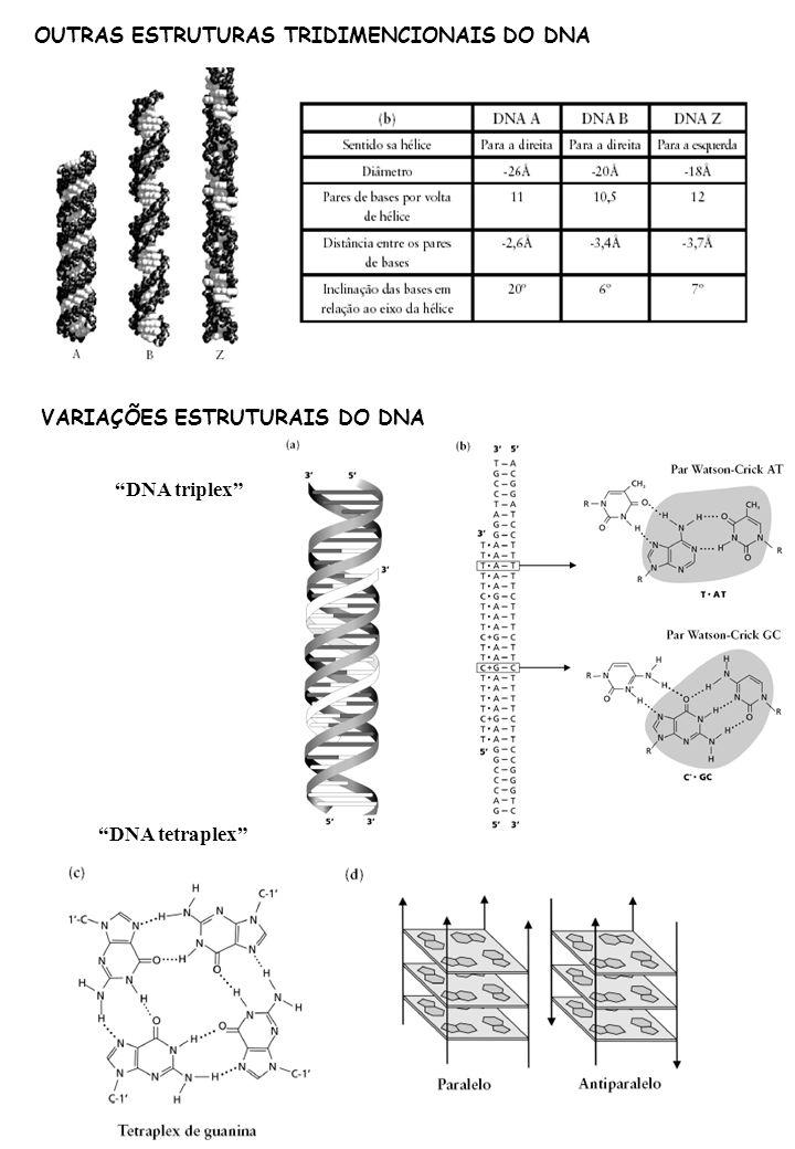 OUTRAS ESTRUTURAS TRIDIMENCIONAIS DO DNA