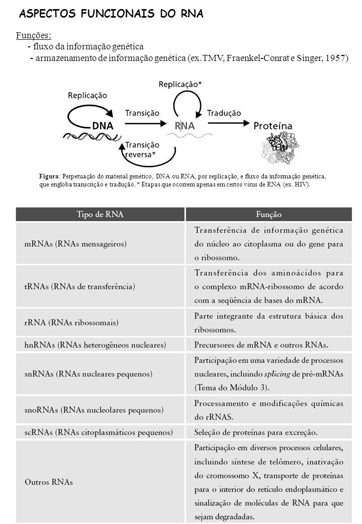 ASPECTOS FUNCIONAIS DO RNA