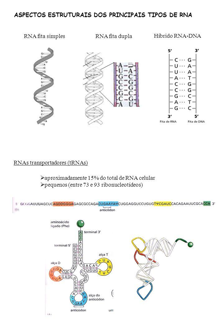 ASPECTOS ESTRUTURAIS DOS PRINCIPAIS TIPOS DE RNA