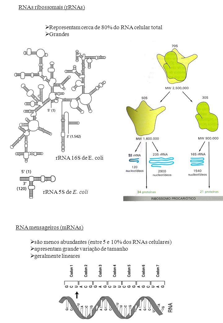 RNAs ribossomais (rRNAs)