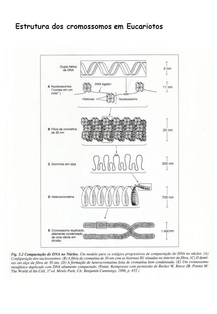 Estrutura dos cromossomos em Eucariotos