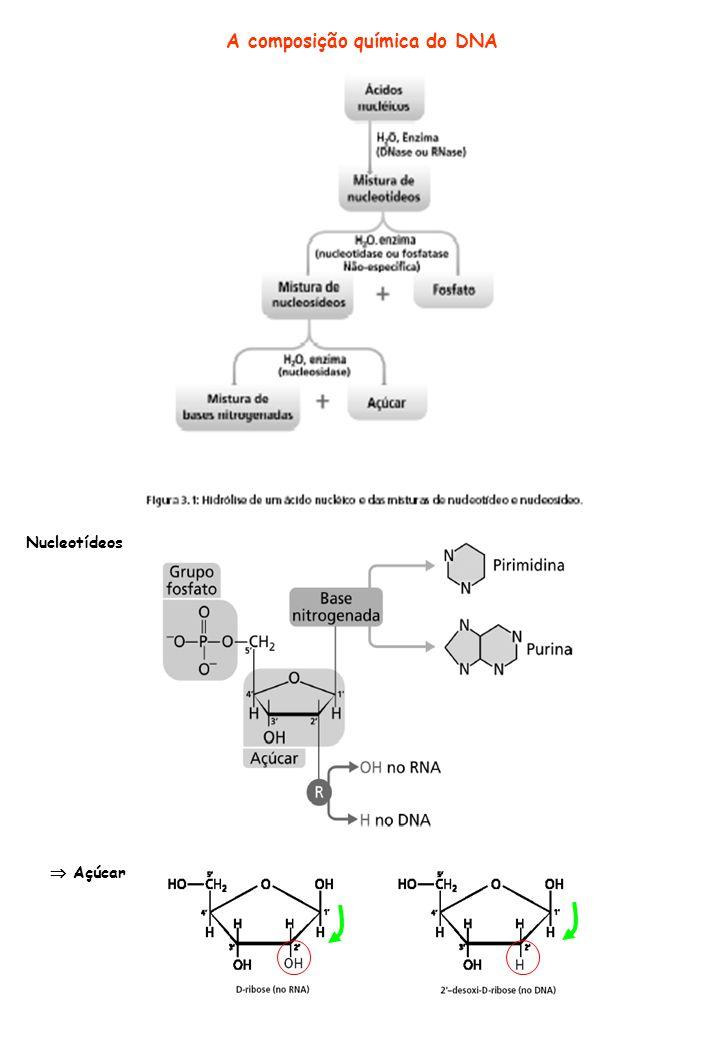A composição química do DNA