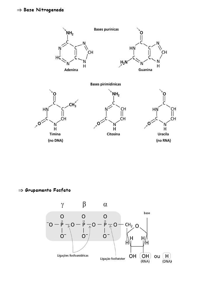  Base Nitrogenada  Grupamento Fosfato