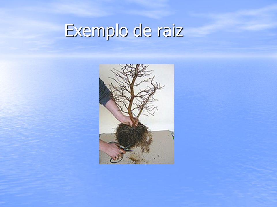 Exemplo de raiz