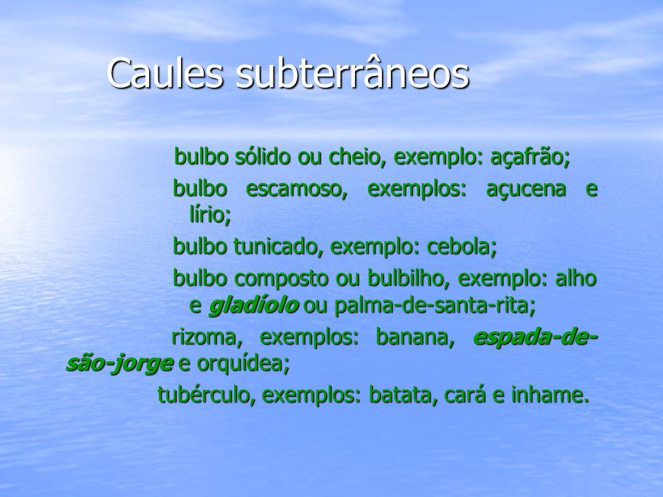Caules subterrâneos bulbo sólido ou cheio, exemplo: açafrão;