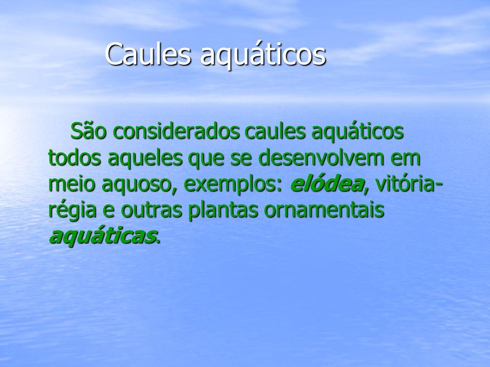 Caules aquáticos