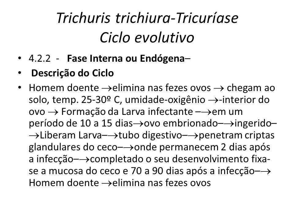 Trichuris trichiura-Tricuríase Ciclo evolutivo