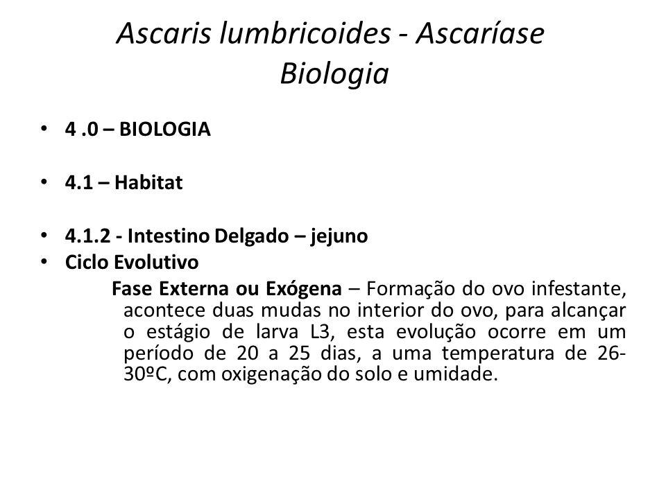 Ascaris lumbricoides - Ascaríase Biologia