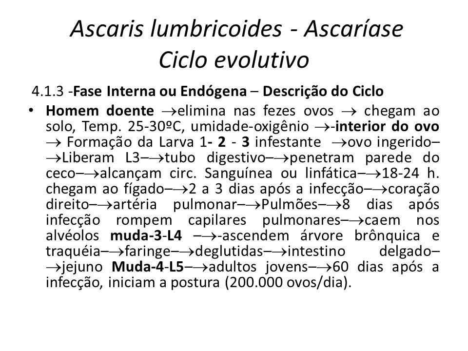 Ascaris lumbricoides - Ascaríase Ciclo evolutivo