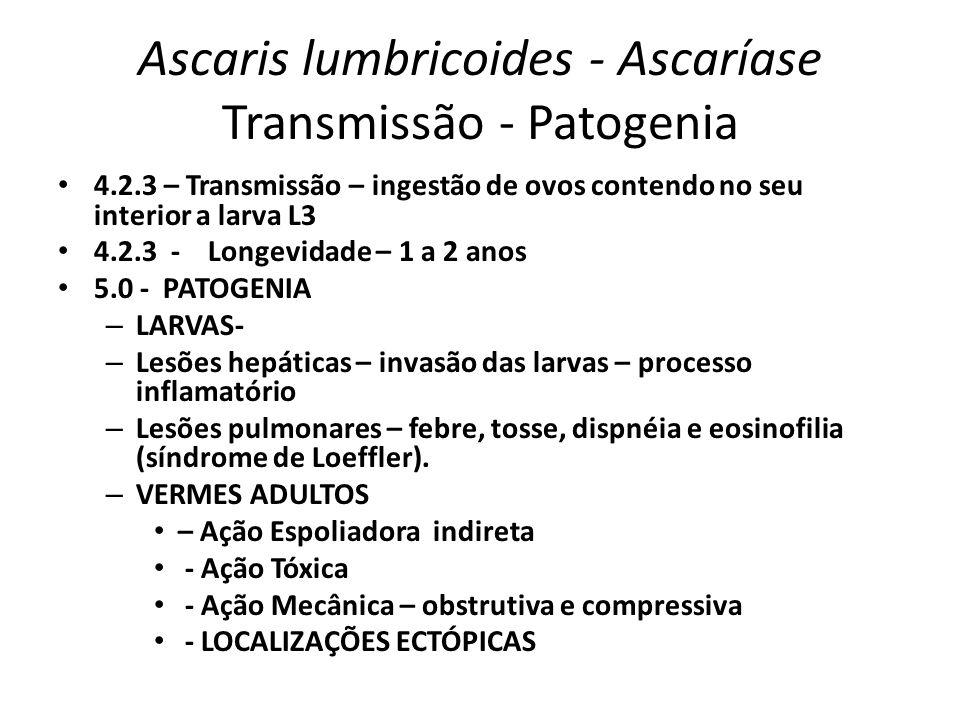 Ascaris lumbricoides - Ascaríase Transmissão - Patogenia