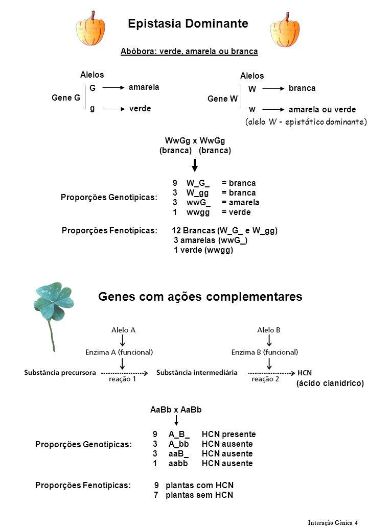 Genes com ações complementares