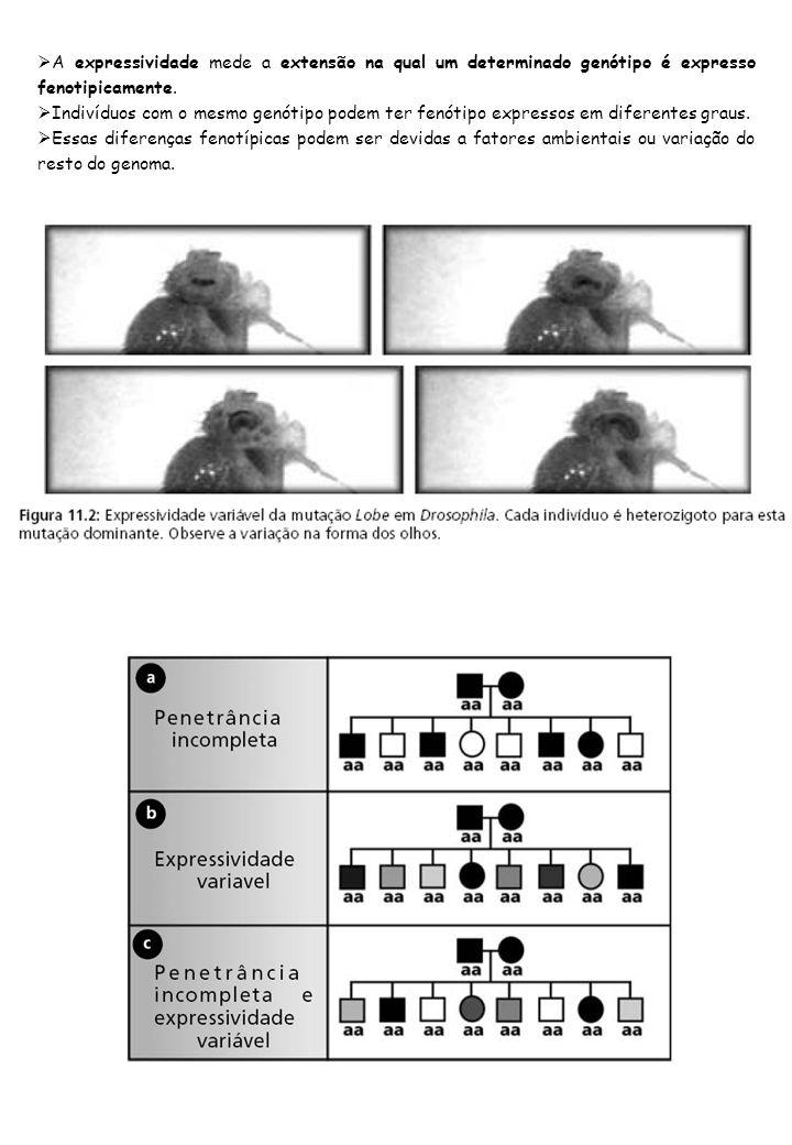 A expressividade mede a extensão na qual um determinado genótipo é expresso fenotipicamente.