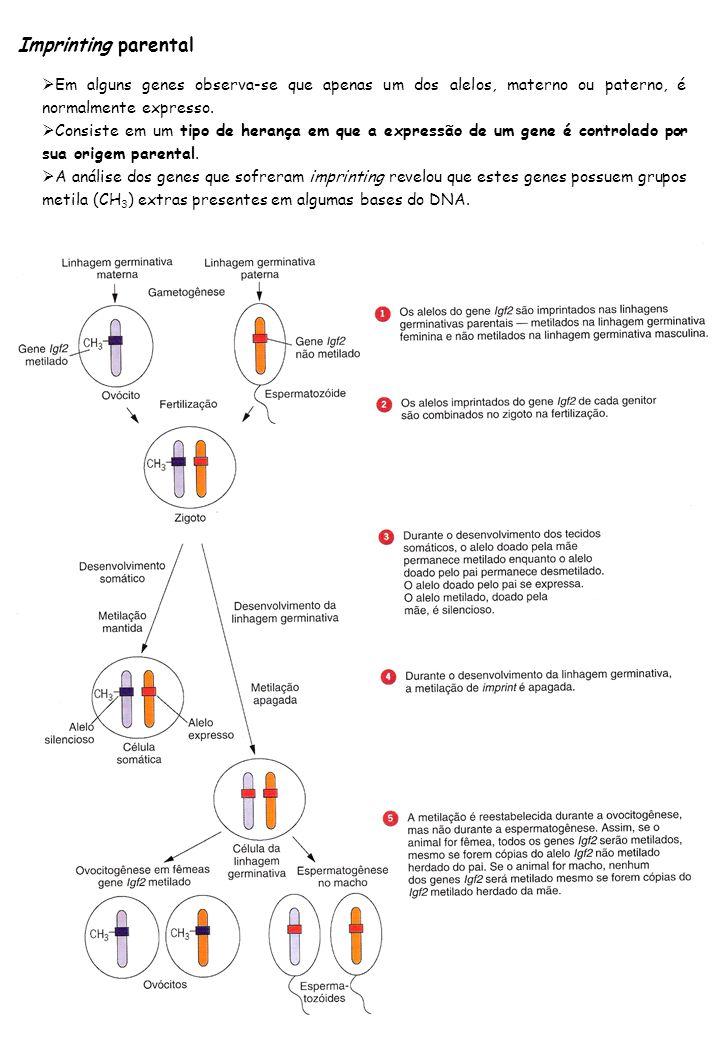 Imprinting parental Em alguns genes observa-se que apenas um dos alelos, materno ou paterno, é normalmente expresso.