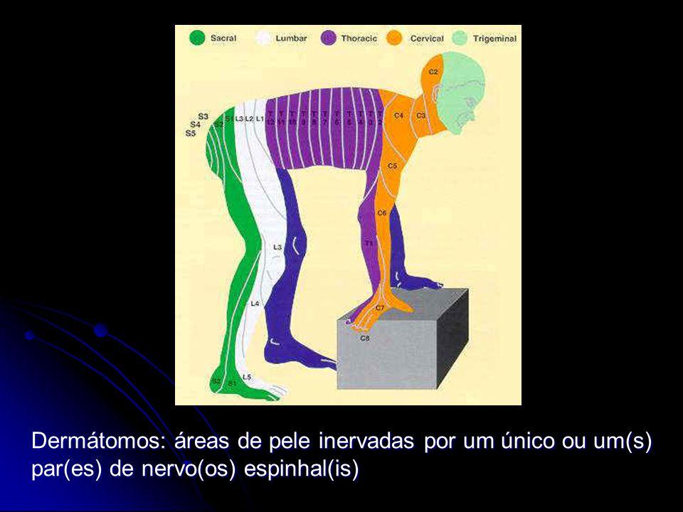 Dermátomos: áreas de pele inervadas por um único ou um(s) par(es) de nervo(os) espinhal(is)