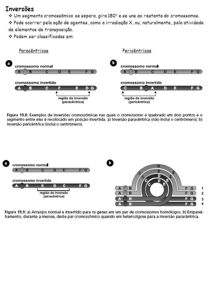 Inversões Um segmento cromossômico se separa, gira 180o e se une ao restante do cromossomos.