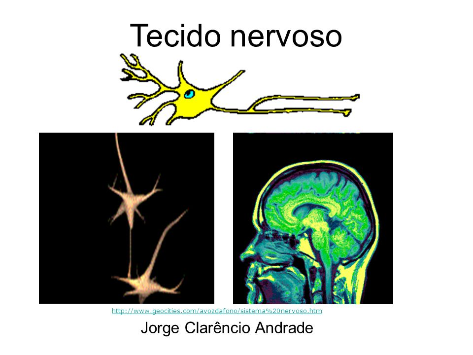 Tecido nervoso Jorge Clarêncio Andrade