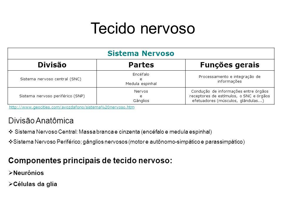 Tecido nervoso Divisão Anatômica