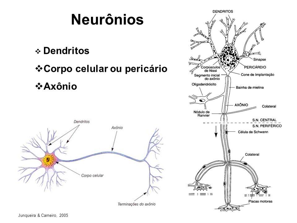 Neurônios Corpo celular ou pericário Axônio Dendritos