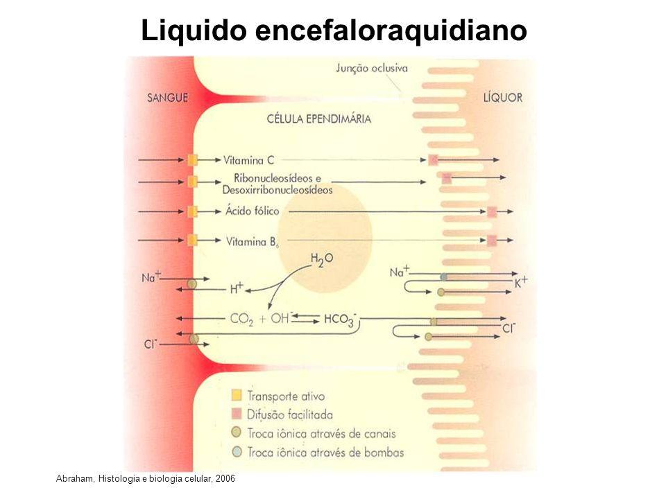 Liquido encefaloraquidiano