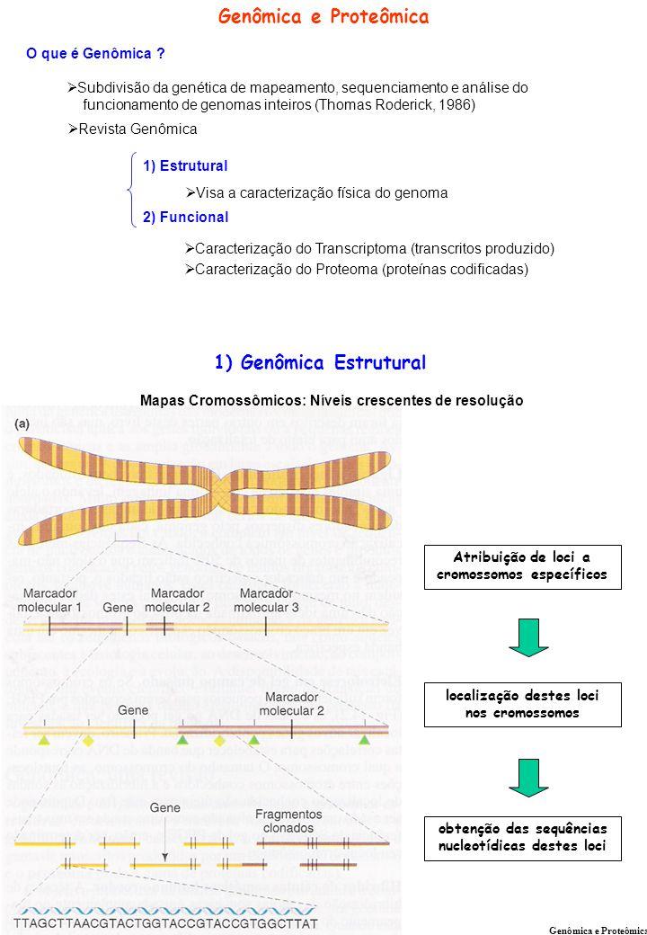 Genômica e Proteômica 1) Genômica Estrutural O que é Genômica