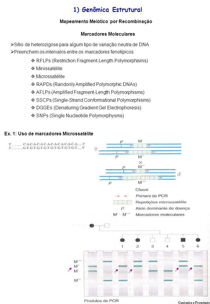 Ex. 1: Uso de marcadores Microssatélite