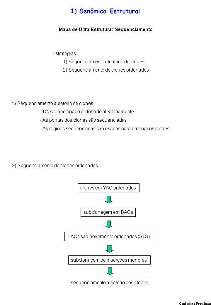 Mapa de Ultra-Estrutura: Sequenciamento