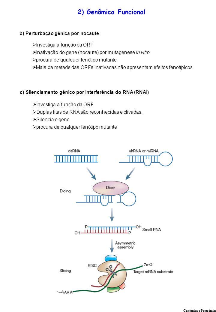 2) Genômica Funcional b) Perturbação gênica por nocaute