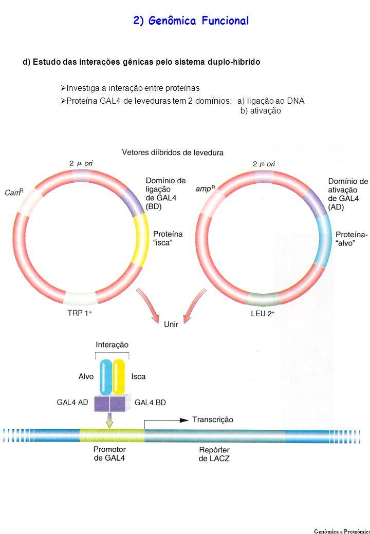 2) Genômica Funcional d) Estudo das interações gênicas pelo sistema duplo-híbrido. Investiga a interação entre proteínas.
