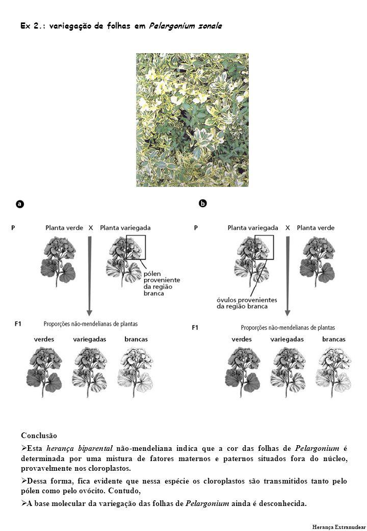 Ex 2.: variegação de folhas em Pelargonium zonale