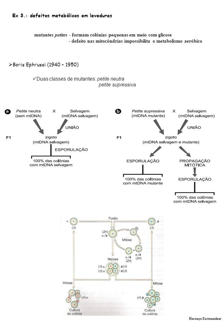 Ex 3.: defeitos metabólicos em leveduras
