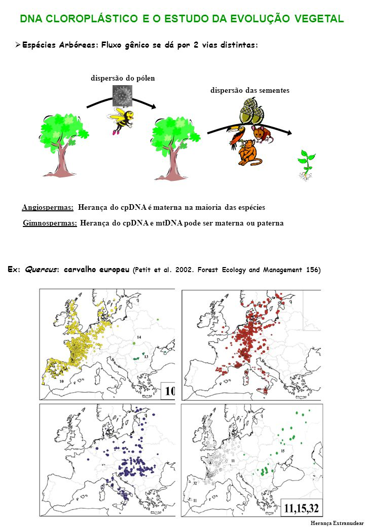 Espécies Arbóreas: Fluxo gênico se dá por 2 vias distintas: