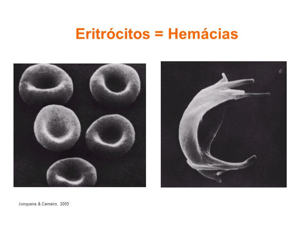 Eritrócitos = Hemácias
