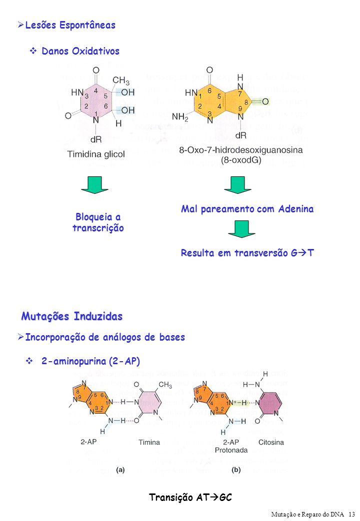 Mutações Induzidas Lesões Espontâneas Danos Oxidativos