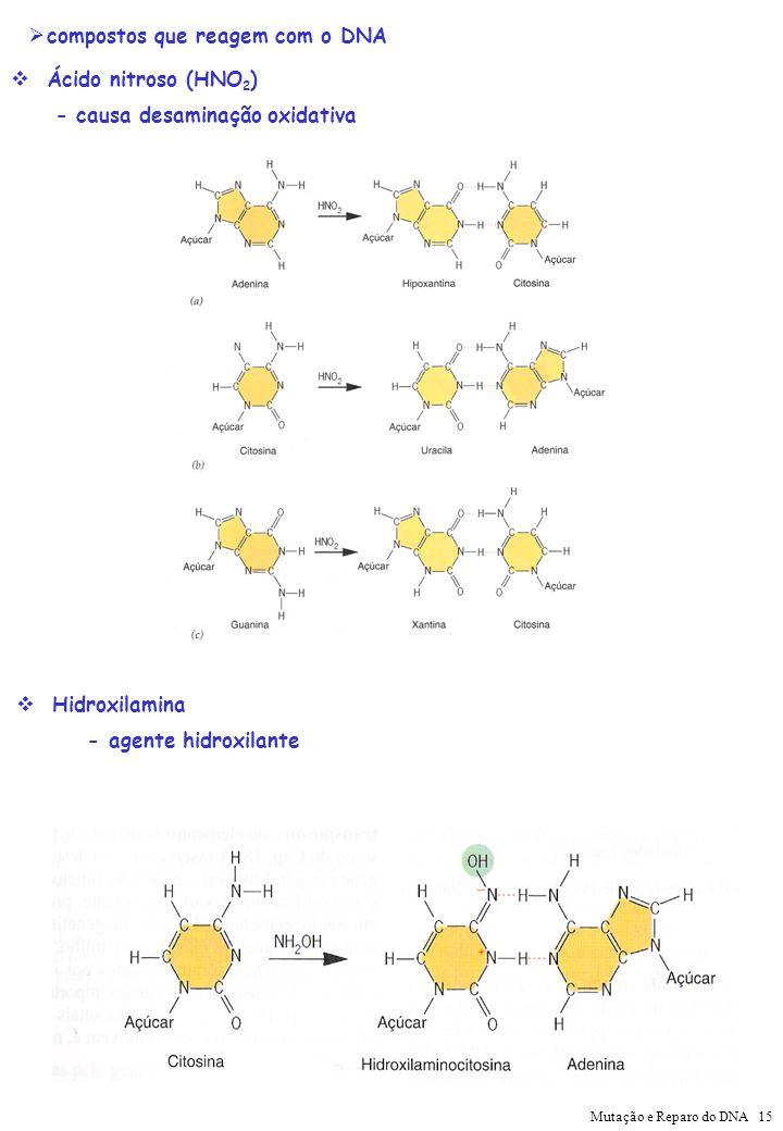 compostos que reagem com o DNA
