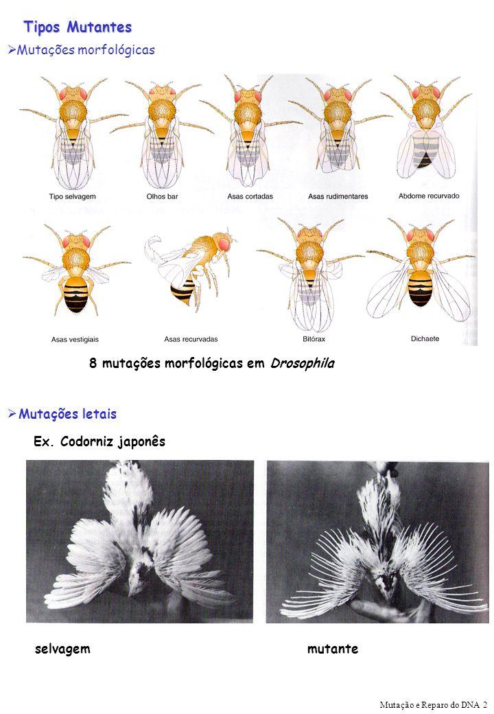 Tipos Mutantes Mutações morfológicas