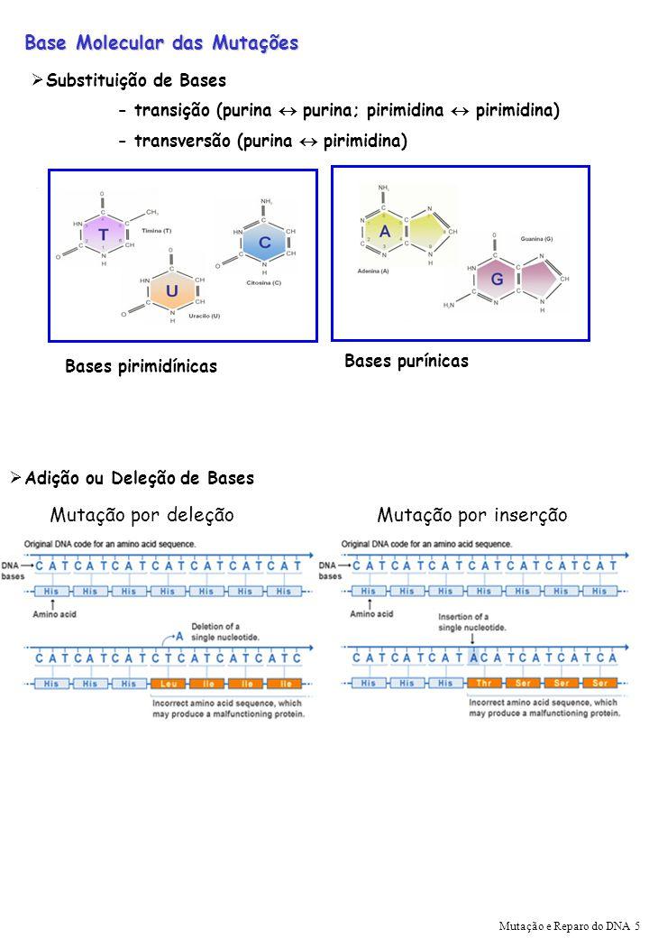 Base Molecular das Mutações