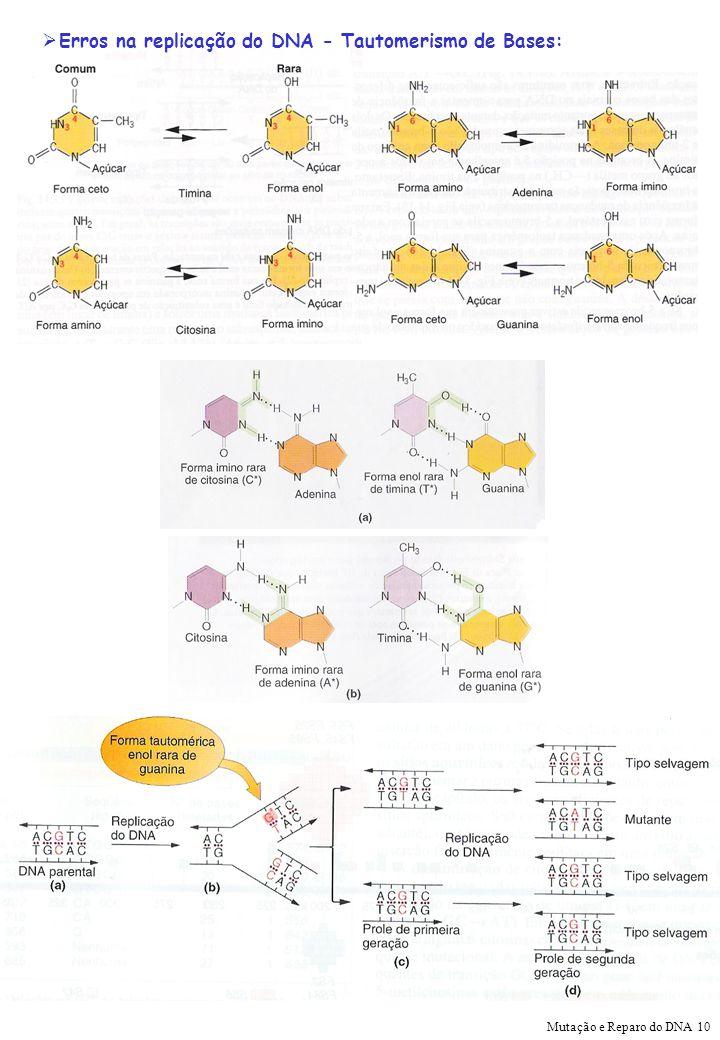 Erros na replicação do DNA - Tautomerismo de Bases: