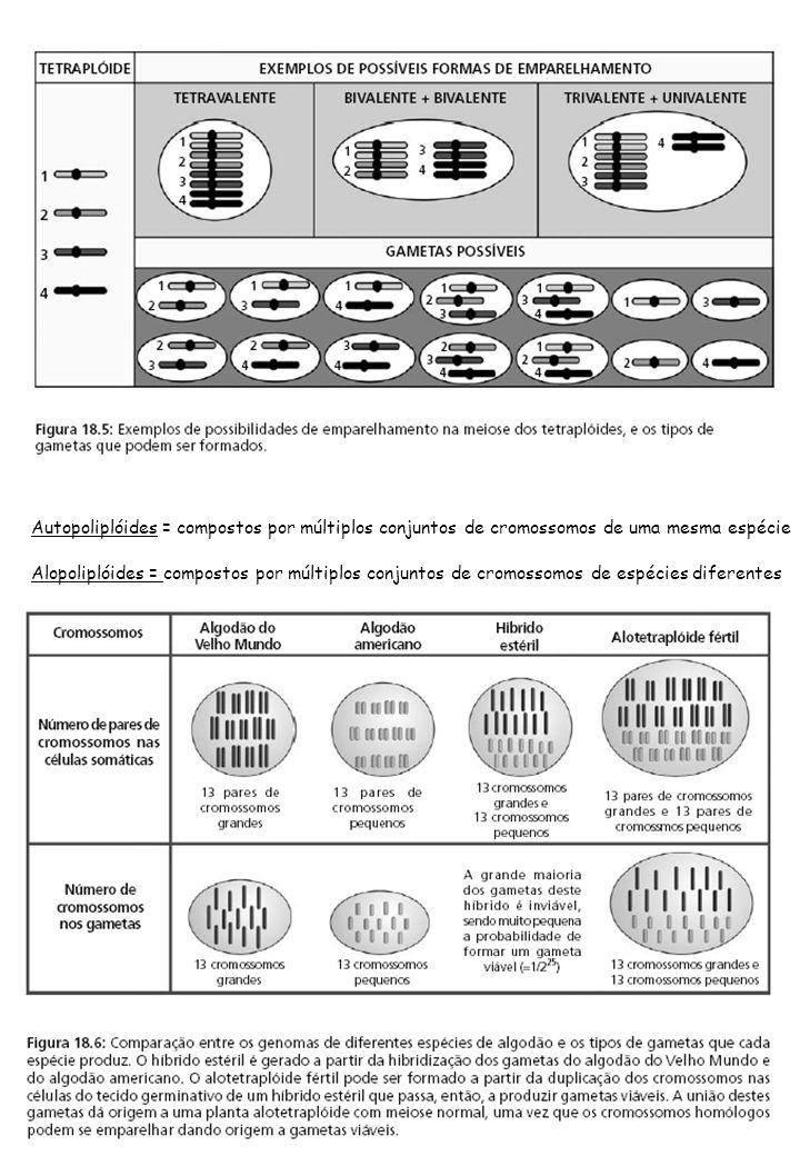 Autopoliplóides = compostos por múltiplos conjuntos de cromossomos de uma mesma espécie